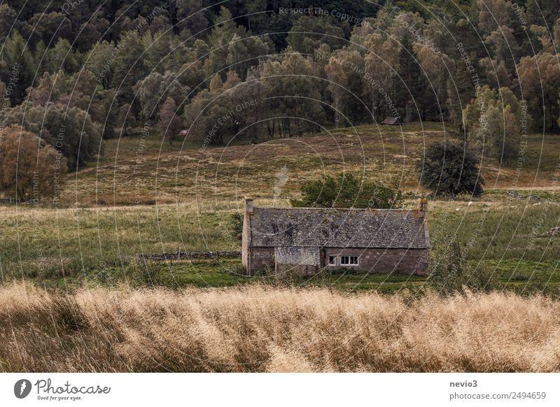 Schottisches Steinhaus am Waldrand Umwelt Natur Landschaft Wind Gras Haus Hütte historisch kalt grau Natursteinhaus Grasland Graswiese dunkel Einsamkeit Wiese
