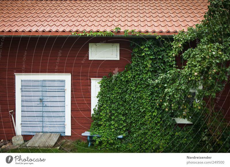 Einnehmendes Wesen Natur Pflanze Haus Fenster Wand Holz Garten Mauer Tür Fassade außergewöhnlich Lifestyle Sträucher Häusliches Leben Idylle Gelassenheit