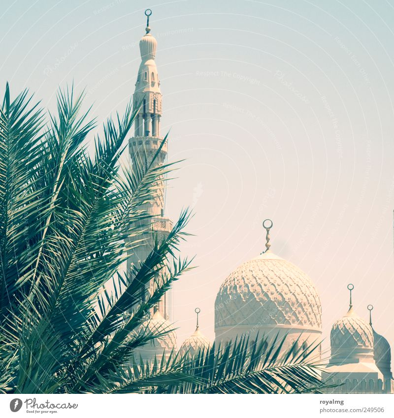Im Verborgenen Tourismus Ausflug Ferne Städtereise Sommer Sommerurlaub Wolkenloser Himmel Dubai Vereinigte Arabische Emirate Moschee Sehenswürdigkeit