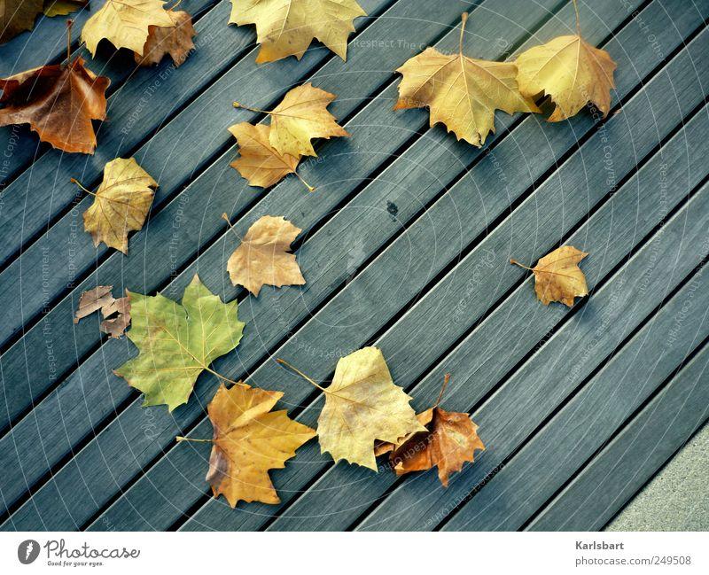 Die Ewigkeit ist verliebt in die Schöpfung der Zeit. Garten Erntedankfest Gartenarbeit Umwelt Natur Pflanze Herbst Blatt Treppe Balkon Terrasse Verkehrswege
