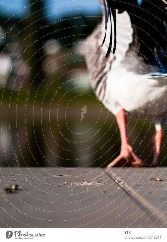 Fly away Natur Pflanze Einsamkeit Tier Umwelt Landschaft Gefühle Bewegung Luft Arbeit & Erwerbstätigkeit gehen fliegen Beginn Wildtier Flügel Feder