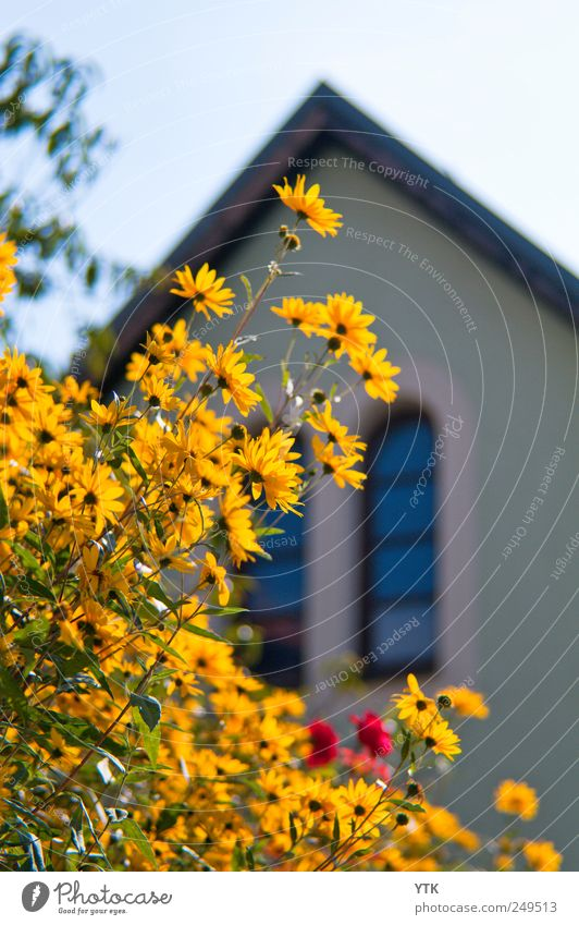 Corner of Main Street Natur Pflanze Sommer Blume ruhig Haus Erholung Fenster Wand Umwelt Mauer Gebäude Wetter Fassade hoch Sträucher