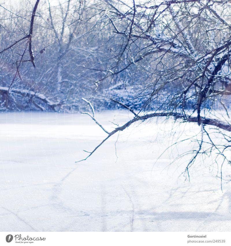 Frost Umwelt Natur Landschaft Winter Schönes Wetter Eis Schnee Baum Wald Flussufer kalt schön blau weiß Ast Wintertag Winterwald Winterstimmung Wintermorgen
