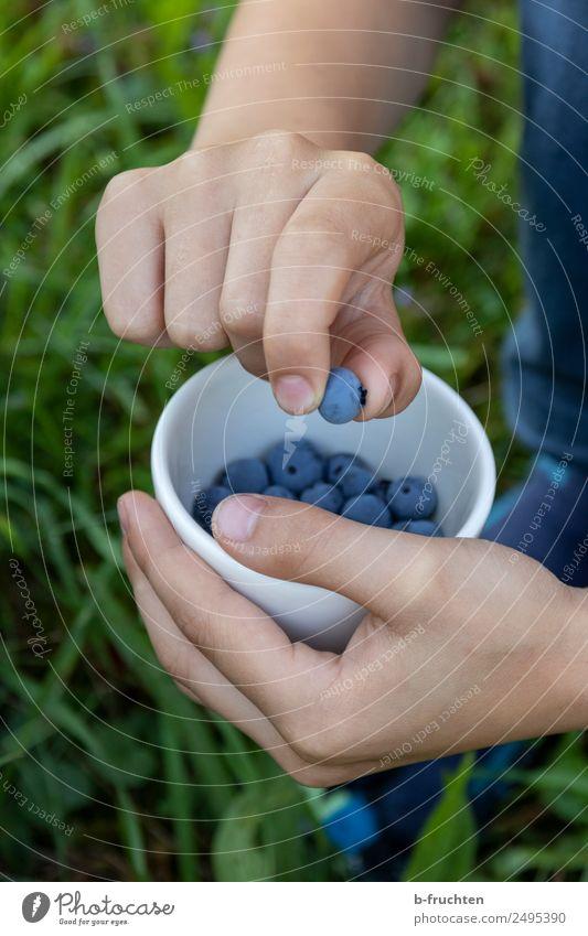 Kind zeigt Heidelbeere Lebensmittel Frucht Bioprodukte Schalen & Schüsseln Hand 8-13 Jahre Kindheit Sommer Garten Wiese wählen Essen festhalten genießen stehen