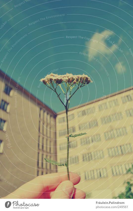 Natürlichkeit. Himmel Natur blau Hand Pflanze Wolken ruhig Leben dunkel Fenster Wand Blüte Mauer braun dreckig natürlich