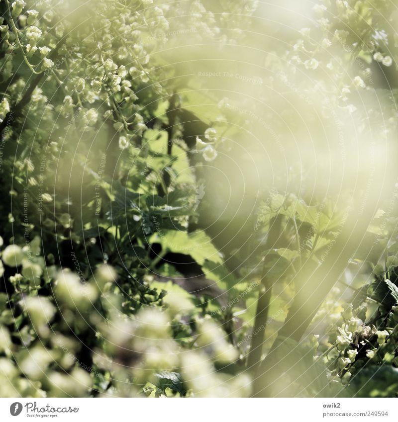 Blütenduft Umwelt Natur Landschaft Pflanze Frühling Klima Schönes Wetter Baum Blatt Park atmen glänzend leuchten authentisch hell nah natürlich schön Duft