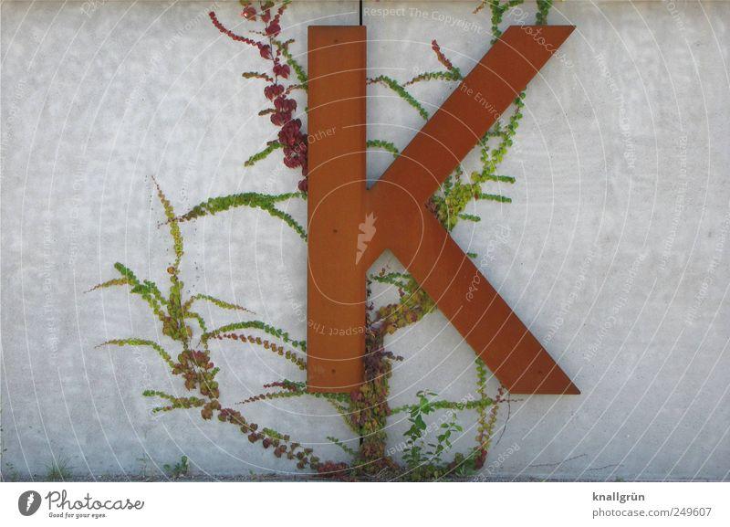 Natürliches K Umwelt Natur Pflanze Efeu Grünpflanze Wildpflanze Mauer Wand Schriftzeichen groß braun grau grün Kunst Rost Ranke Wilder Wein Farbfoto