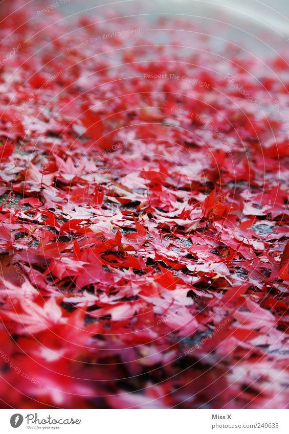 Rot rot Blatt Straße Herbst Bürgersteig Herbstlaub herbstlich Ahornblatt Rutschgefahr