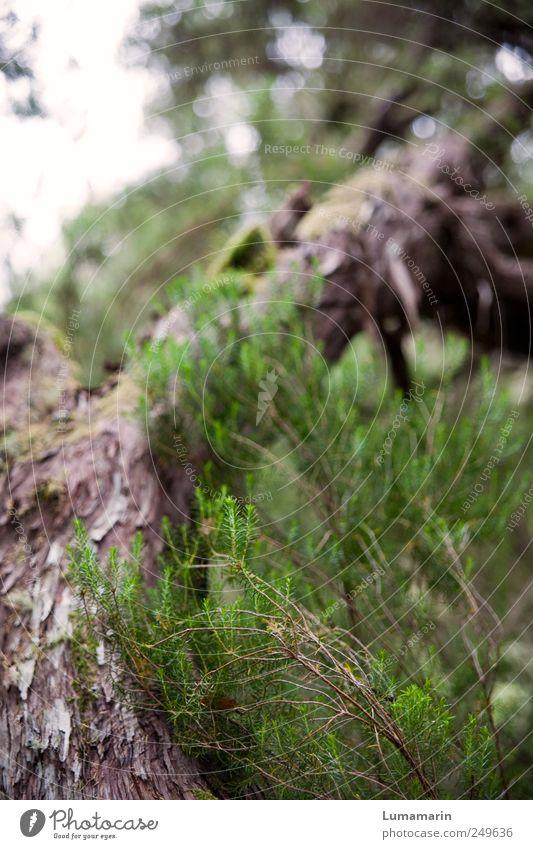 back to the roots Natur Baum Pflanze Wald Umwelt Kraft hoch Beginn Wachstum natürlich wild Perspektive nah trocken unten stark
