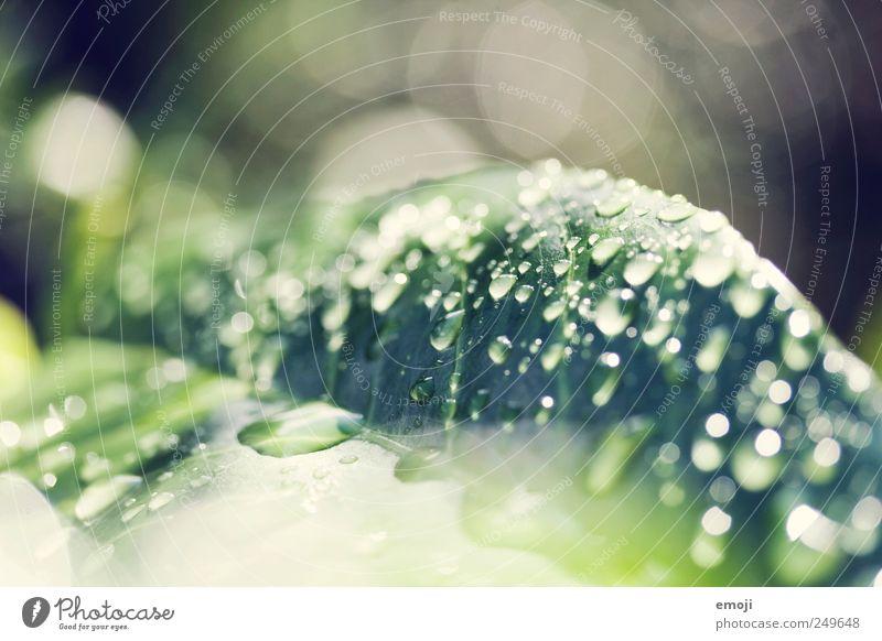 droppin' drops Natur Wasser Wassertropfen Regen Pflanze Blatt frisch grün Tropfen Unschärfe Farbfoto Außenaufnahme Nahaufnahme Detailaufnahme Makroaufnahme