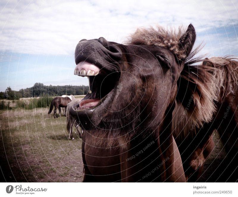 Tierisch gut Natur Freude Glück lachen verrückt wild Pferd außergewöhnlich Tiergesicht Lebensfreude positiv frech Ponys Optimismus Herde