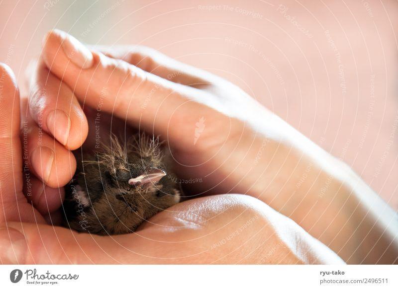 der Alfred Hand Tier Tierjunges Wärme Vogel Kraft niedlich Hilfsbereitschaft berühren weich Schutz Sicherheit Vertrauen Fürsorge Geborgenheit Optimismus