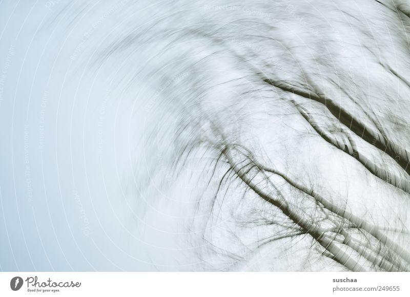 in allen wipfeln spürest du ... Umwelt Natur Himmel Wolkenloser Himmel Winter Klima Wetter Wind Holz atmen trist Politische Bewegungen Luft Ast kühl kalt triest