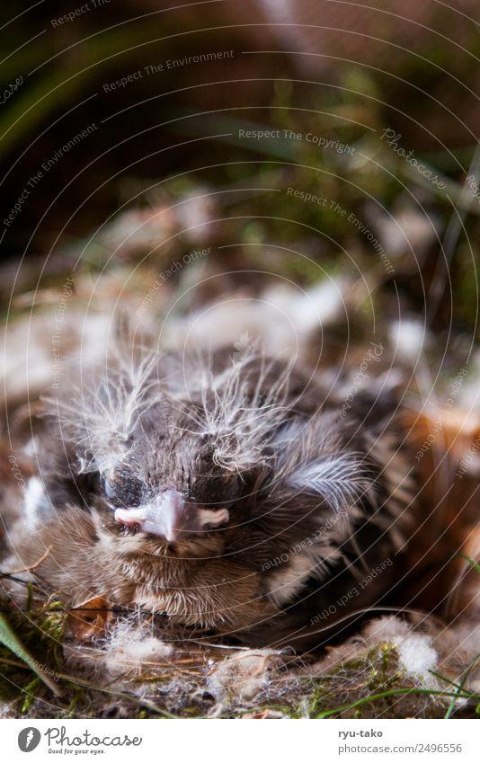 Alfred hat ne coole Frise Tier Vogel Flügel 1 Tierjunges natürlich niedlich weich Tapferkeit Kraft Vertrauen Schutz Geborgenheit Tierliebe ruhig schlafen