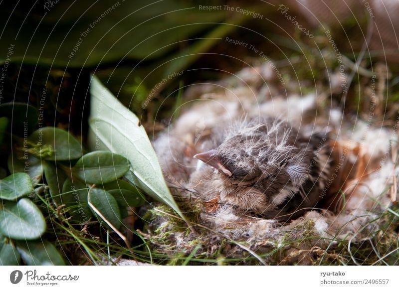 Piep-Nest Tier Vogel Buchfink 1 Tierjunges schlafen niedlich weich Kraft Sicherheit Schutz Geborgenheit Warmherzigkeit Tierliebe Hilfsbereitschaft geduldig