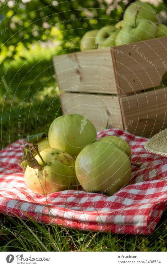 Streuobstwiese, Apfelernte Natur Sommer Pflanze Baum Wiese Gras Lebensmittel Garten Frucht frisch genießen lecker viele Ernte Sammlung