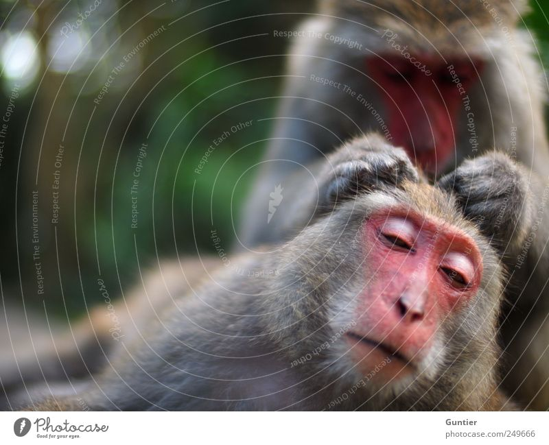 Haaaarrrrrr,... Wildtier 2 Tier Tierpaar grau grün rosa schwarz silber Affen Vertrauen Zufriedenheit Kraulen Zuneigung Säugetier Körperpflege Konzentration Auge
