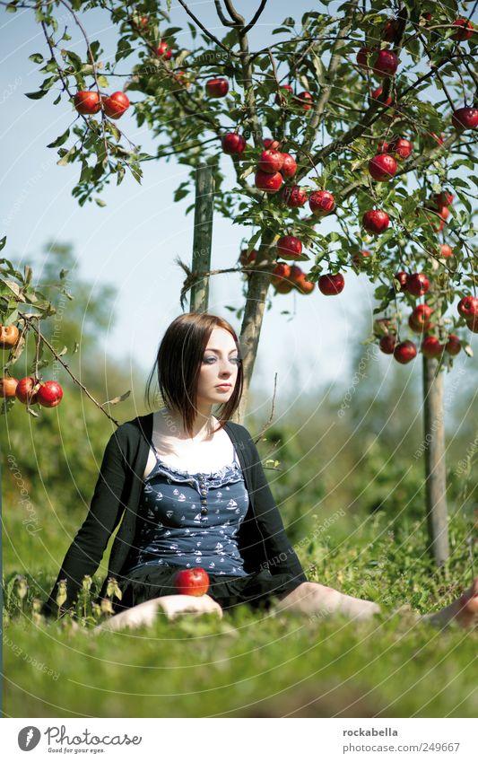 über den sieben bergen. Natur schön Baum Pflanze Freude Wiese Umwelt Garten Glück träumen Park Zufriedenheit sitzen ästhetisch Fröhlichkeit