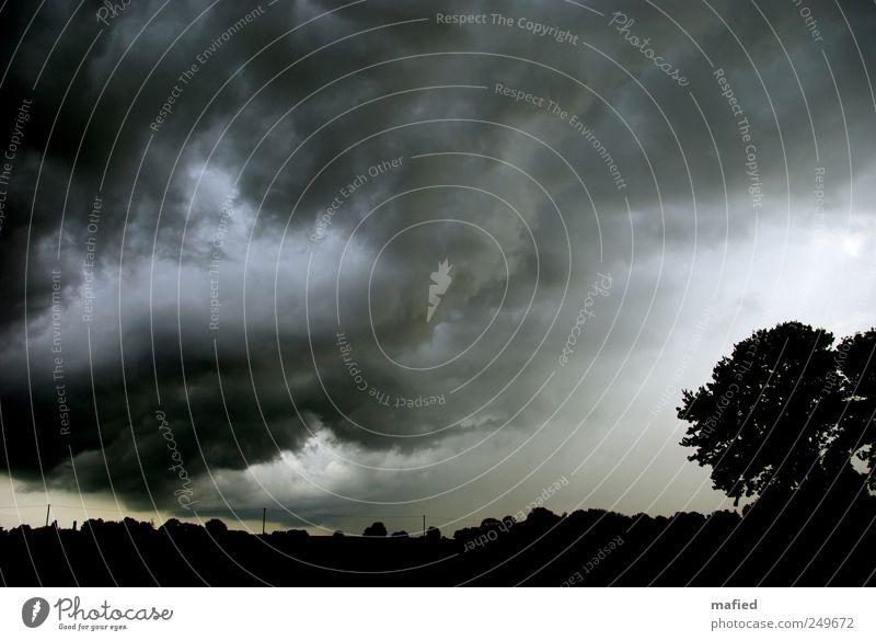 Der Untergang Möwistans Natur Landschaft Himmel Wolken Gewitterwolken Sommer Klima Klimawandel Wetter schlechtes Wetter Unwetter Sturm Regen Baum Feld