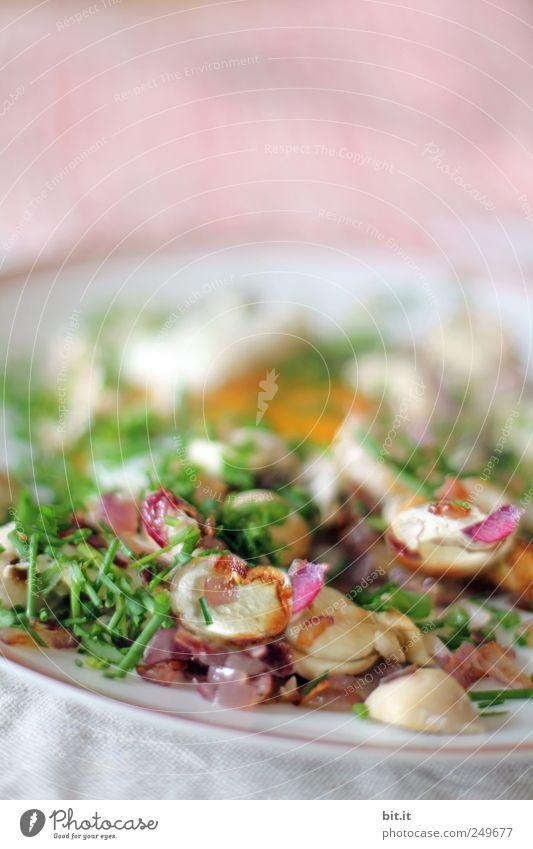 Schwammerln-Teller Lebensmittel Gemüse Kräuter & Gewürze Ernährung Bioprodukte Fasten Küche Restaurant Feste & Feiern Berufsausbildung Azubi Koch Duft genießen
