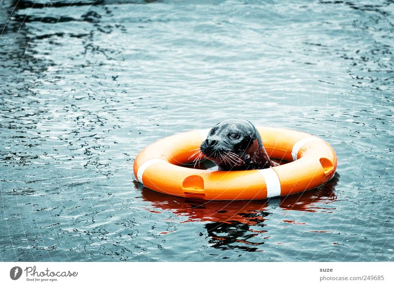 Darth Vader blau Wasser Meer Tier Umwelt Kopf lustig orange Schwimmen & Baden Wildtier wild niedlich Neugier Tiergesicht Im Wasser treiben Rettung
