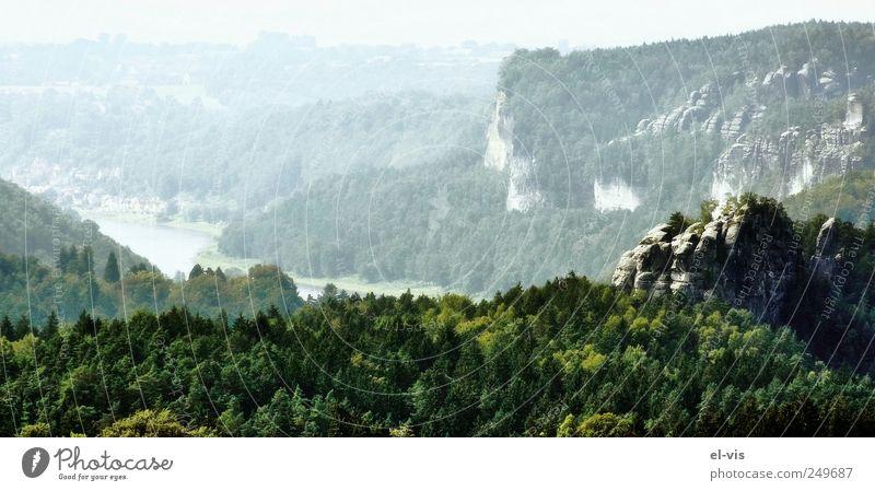 Brandaussicht weiß grün blau Sommer Ferien & Urlaub & Reisen ruhig Wald Erholung Berge u. Gebirge Freiheit Umwelt Landschaft Luft hell Deutschland Nebel