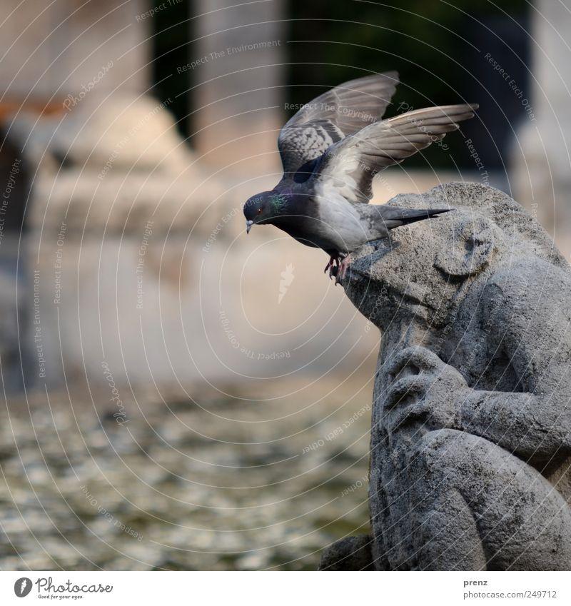 Märchenbrunnen Tier grau fliegen Stein Park Tourismus Wildtier Flügel Brunnen Sehenswürdigkeit Skulptur Taube Frosch Märchen Fabelwesen Kunst