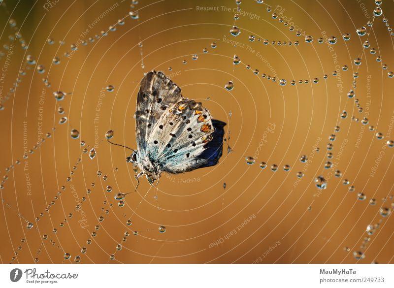 Schmetterling in Schwierigkeiten Natur Tier Urelemente Luft Wasser Wassertropfen Sonnenaufgang Sonnenuntergang Sonnenlicht Sommer Schönes Wetter Wildpflanze