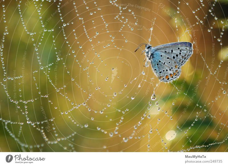Schmetterling in Schwierigkeiten Natur Pflanze Tier Urelemente Luft Wasser Wassertropfen Sonnenaufgang Sonnenuntergang Sommer Klima Schönes Wetter Gras Blatt