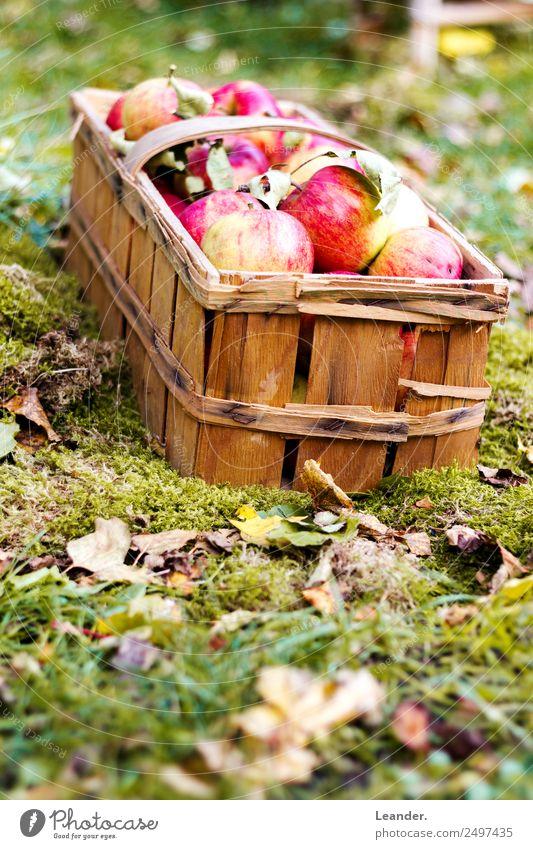 Apfelkorb Lifestyle kaufen Reichtum Gesundheit Gesundheitswesen Gesunde Ernährung frisch gelb grün Essen Korb blau Bioprodukte Natur natürliche Farbe