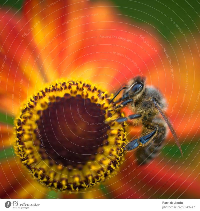 am Rad drehen Natur schön Pflanze Sommer Blume Tier Auge Umwelt Garten Blüte Arbeit & Erwerbstätigkeit ästhetisch Wildtier Urelemente Biene Sammlung