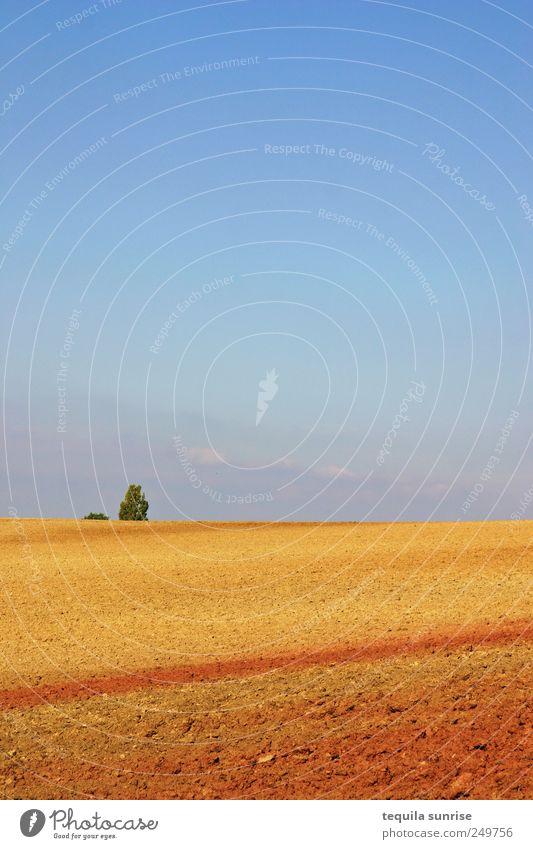 Spätsommeracker Natur Landschaft Pflanze Erde Sand Luft Himmel Wolkenloser Himmel Sonnenlicht Sommer Herbst Schönes Wetter Baum Sträucher Hügel trist trocken
