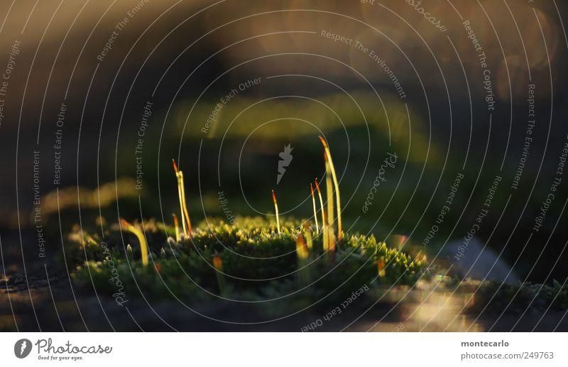 Naturstreichhölzer Pflanze Herbst Umwelt Blüte klein See ästhetisch Brücke authentisch weich leuchten Dorf Blühend Seeufer Schönes Wetter