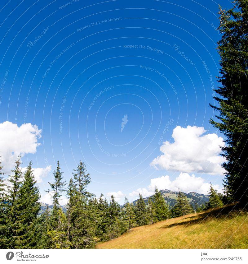 Bergidylle! Natur blau Sommer ruhig Wald Erholung Berge u. Gebirge Freiheit oben Landschaft Gras Zufriedenheit Feld wandern Tourismus authentisch