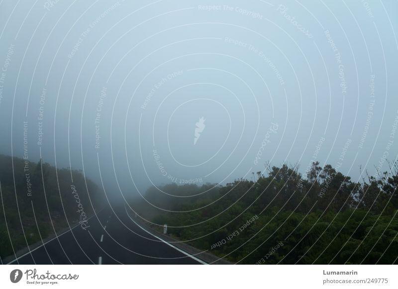 dropout Umwelt Landschaft Herbst Klima Wetter schlechtes Wetter Nebel Sträucher Verkehr Verkehrswege Straße Hochstraße fahren dunkel Ferne frei Unendlichkeit