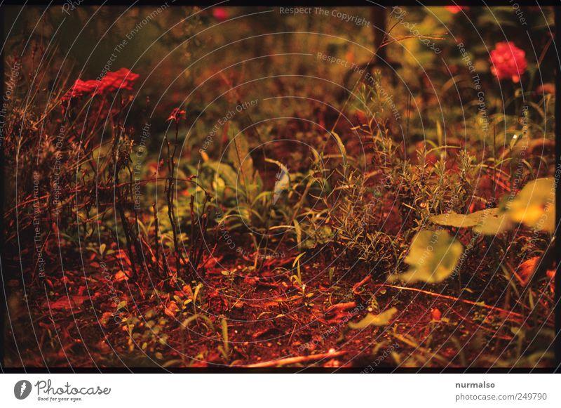 red moment Natur schön Pflanze Blatt Tier Garten träumen Stimmung Kunst Freizeit & Hobby glänzend wild natürlich ästhetisch Häusliches Leben