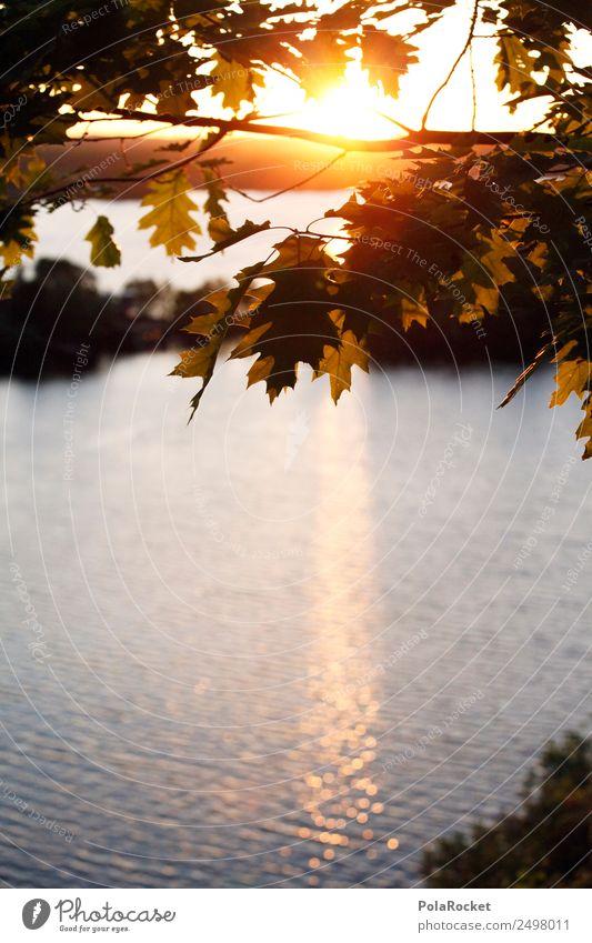 #A# Goldene Zeit Natur Sommer Pflanze Sonne Landschaft Baum ruhig Wald Umwelt See Zufriedenheit Park Wetter ästhetisch Idylle Schönes Wetter