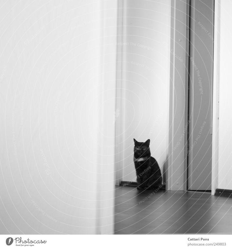 punkt. schön Einsamkeit Tier Wand Katze hell warten sitzen dünn beobachten einzeln verstecken Haustier Flur gestreift Tarnung