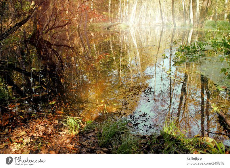 waldsee Natur Wasser Baum Pflanze Blatt Tier Wald Herbst Umwelt Landschaft Gras Stimmung See Freizeit & Hobby Erde Sträucher