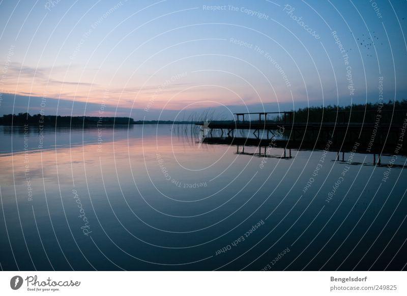 Nachts am See Natur blau Sommer Ferien & Urlaub & Reisen ruhig Ferne Erholung Freiheit Freizeit & Hobby Ausflug Tourismus Schilfrohr Seeufer Steg Meditation