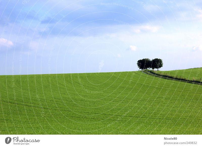 grüne idylle Himmel Natur Baum Sommer ruhig Einsamkeit Ferne Wiese Landschaft Wege & Pfade Feld Idylle Blauer Himmel