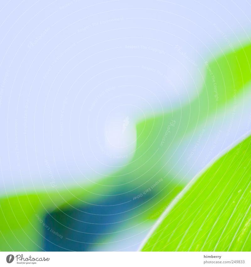 green wave Lifestyle Leben Wohlgefühl Erholung ruhig Meditation Duft Kur Spa Umwelt Natur Pflanze Frühling Sommer Gras Farn Blatt Grünpflanze Nutzpflanze