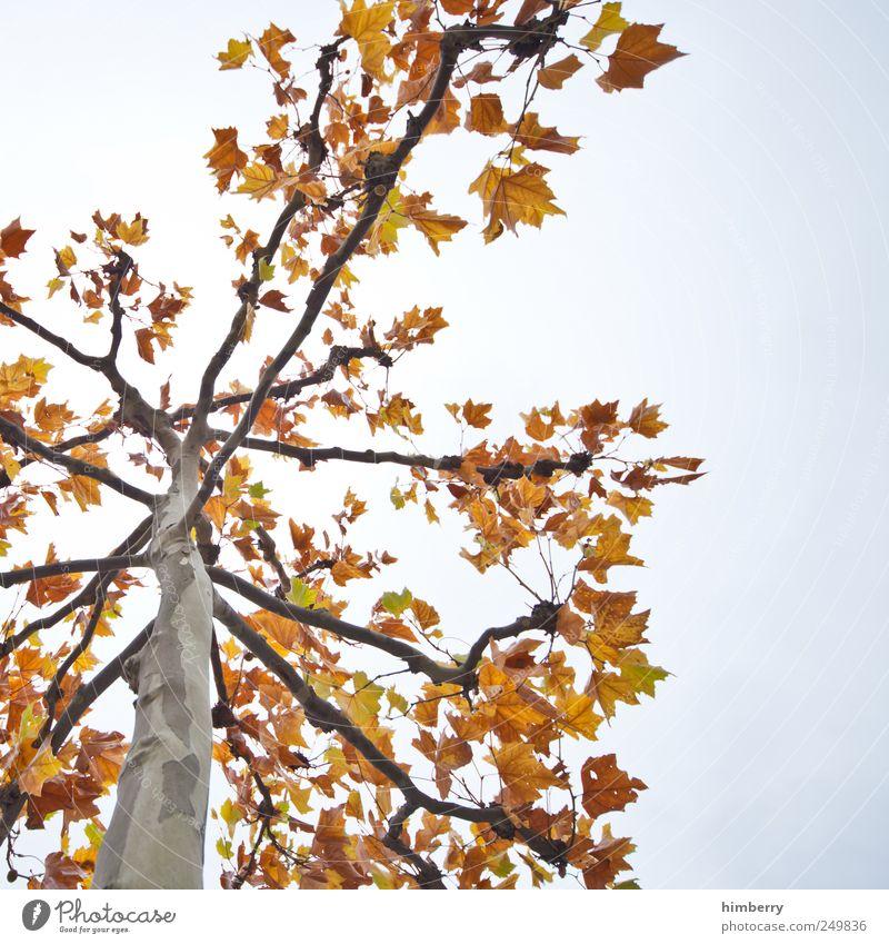 herr herbst Landwirtschaft Forstwirtschaft Umwelt Natur Landschaft Pflanze Herbst Baum Blatt Garten Park Vergänglichkeit Laubbaum Laubwald Jahreszeiten