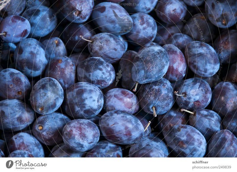Brenngrundlage Frucht süß viele violett Stengel lecker sauer Marmelade Pflaume Pflaumenbaum Steinfrüchte