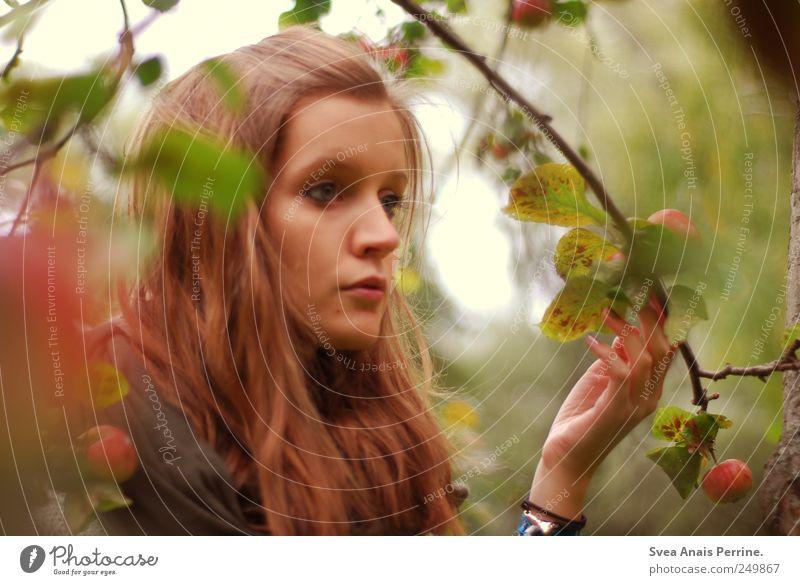 fräulein apfelbaum. Mensch Jugendliche Blatt Erwachsene Herbst feminin natürlich 18-30 Jahre Ast festhalten Apfel Junge Frau brünett langhaarig Frucht Beruf