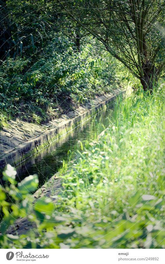 pro natura Natur grün Baum Sommer Wiese Umwelt Gras natürlich Sträucher Fluss Schönes Wetter Flussufer Bach