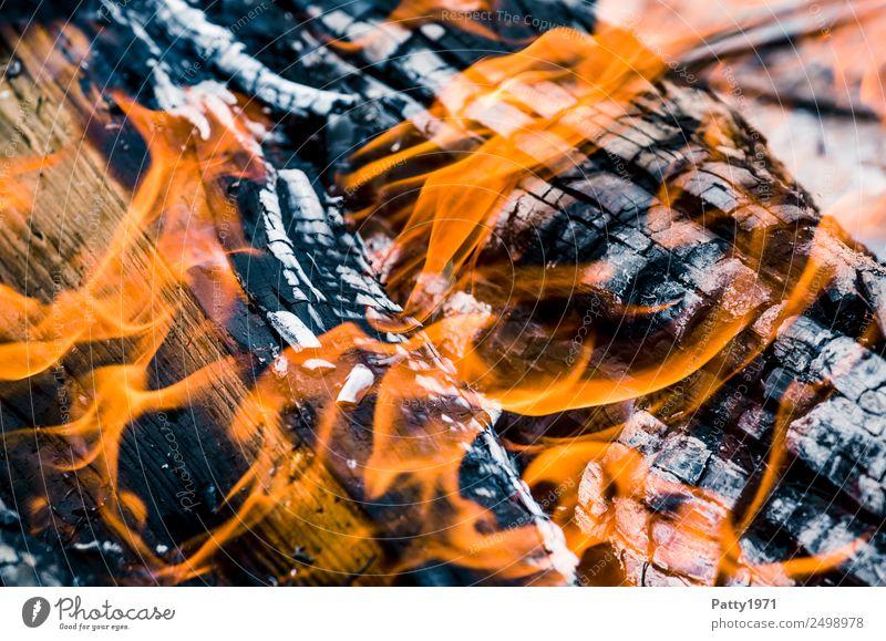 Brennendes Holz Feuerstelle Abenteuer Umwelt Natur Urelemente heiß grau orange schwarz bedrohlich Umweltverschmutzung Zerstörung brennen Farbfoto Nahaufnahme