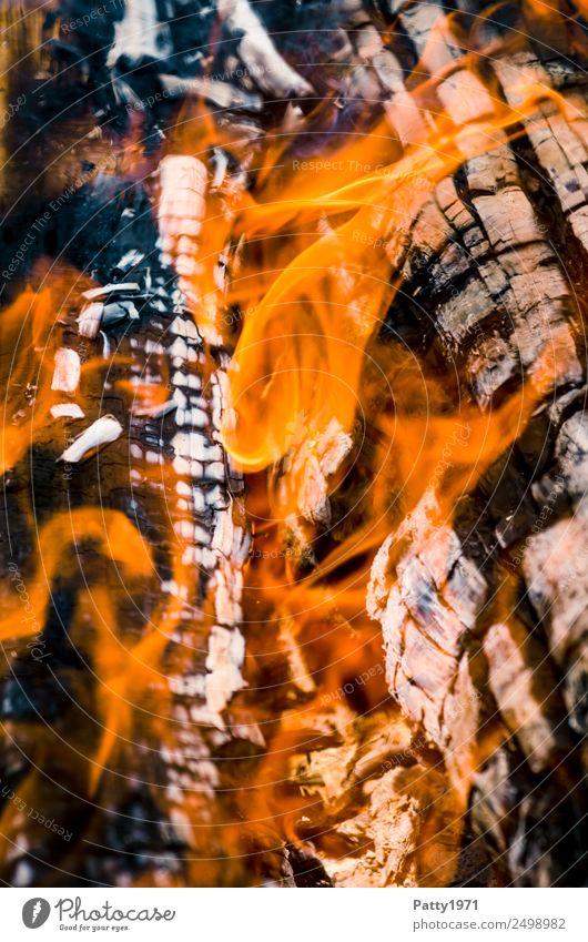 Brennendes Holz Feuerstelle Abenteuer Umwelt Natur Urelemente heiß grau orange schwarz bedrohlich Umweltverschmutzung Zerstörung brennen Farbfoto Außenaufnahme