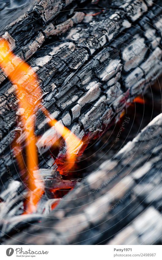 Brennendes Holz Feuerstelle Abenteuer Umwelt Natur Urelemente heiß grau orange rot schwarz bedrohlich Umweltverschmutzung Zerstörung brennen Farbfoto