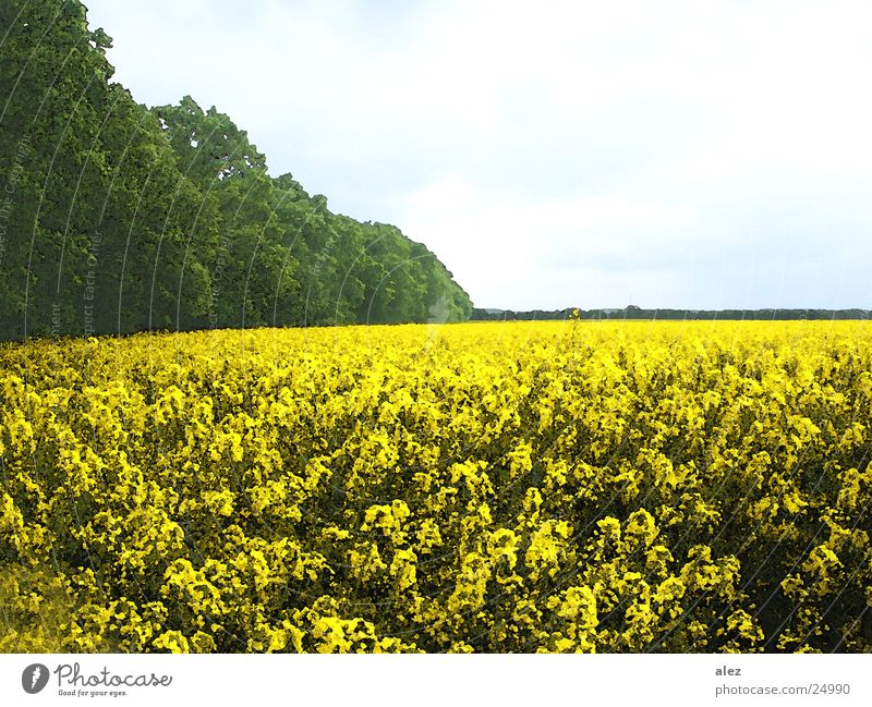 blumenwiese Baum Blume Sommer Wolken Wiese Feld Aussicht Amerika Blumenwiese